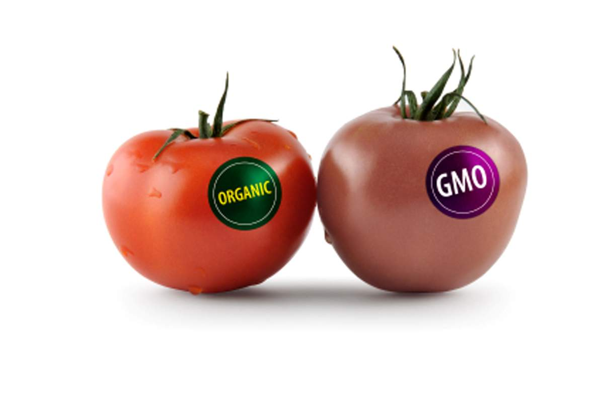 Genetically engineered food comparison