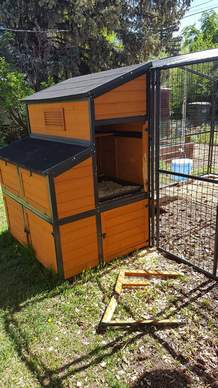 A bear broke into this chicken coop in the 1600 block of West Third Avenue, killing six chickens.