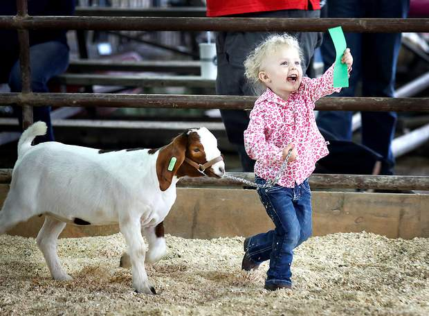Zantha Kugle, 3, runs to her father to show off the ribbon she won for her goat, Minnie, on Friday at the La Plata County Fair in Durango. Zantha is the daughter of Troy and Jessie Kugle.