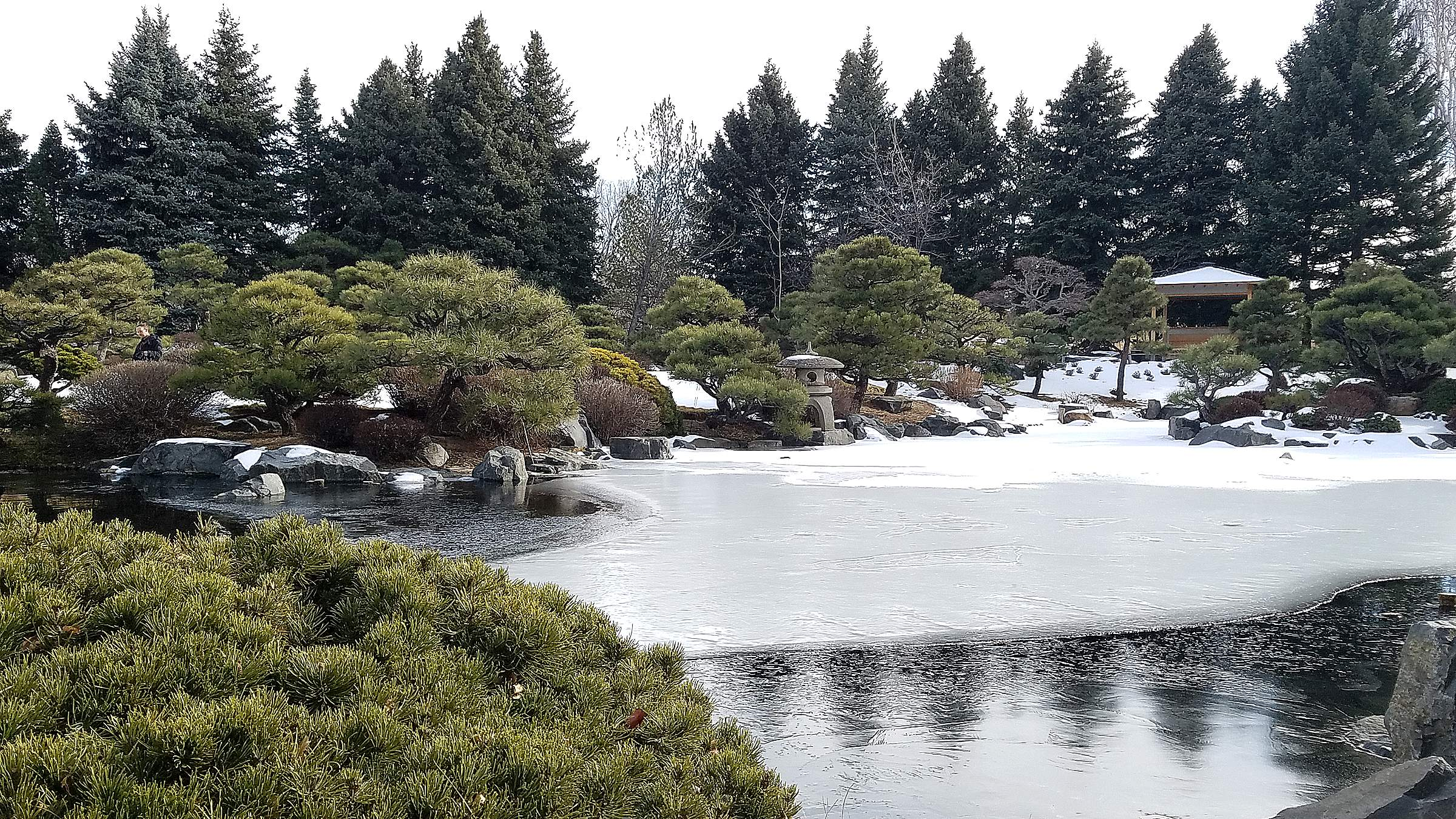 The Partially Frozen Ponds In The Japanese Garden At Denver Botanic Gardens  York Street Make A Serene Winterscape In January.