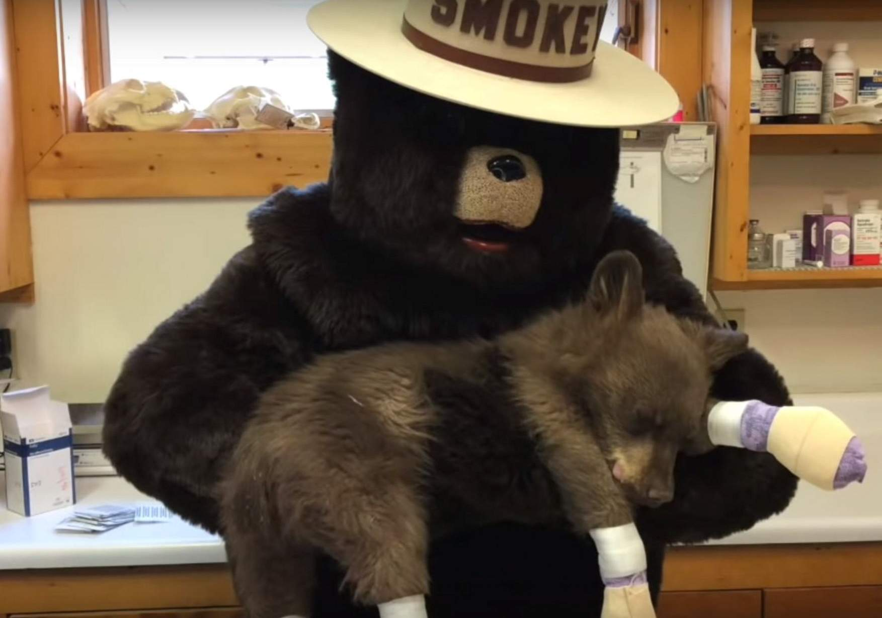 talk about town smokey bear visits cub burned in 416 fire