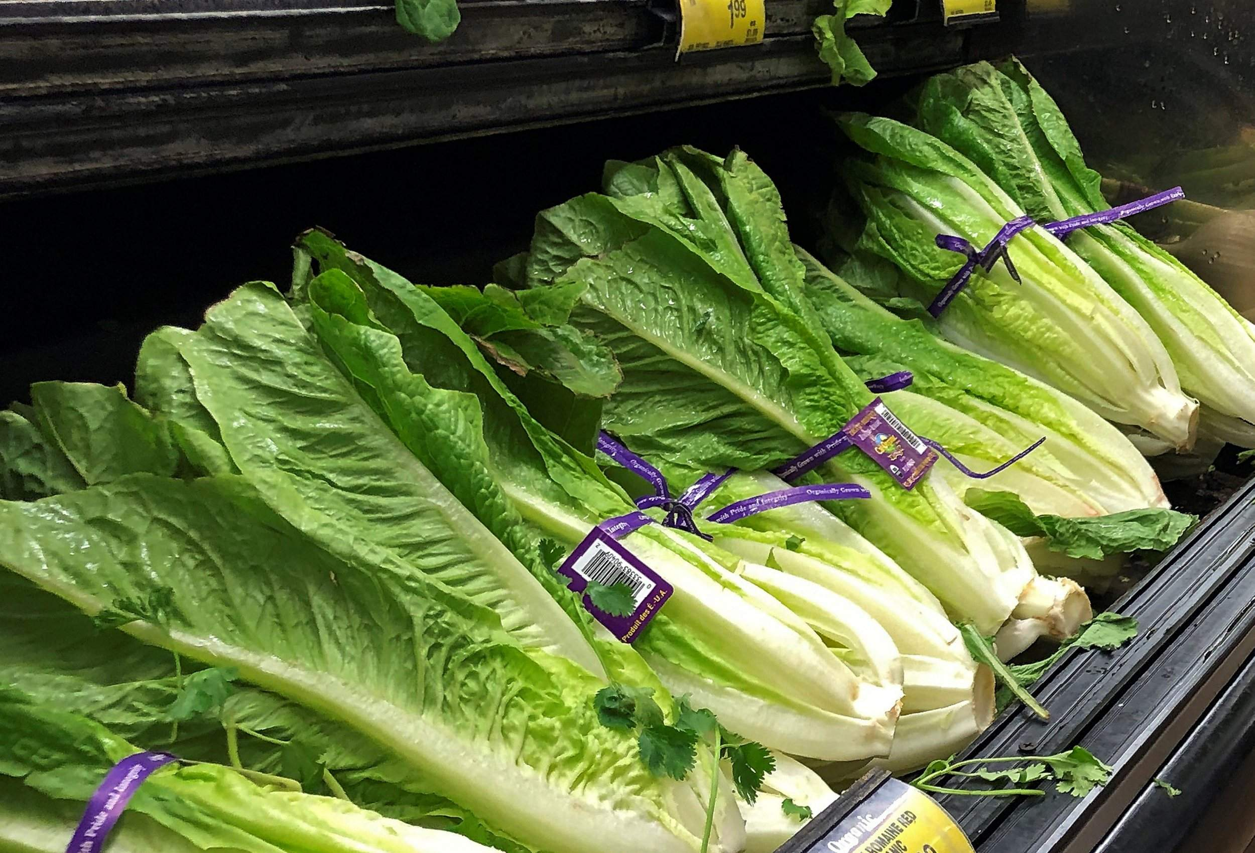 King County man diagnosed with E. coli linked to romaine