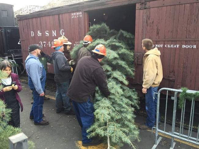 Railroad offers Christmas tree trips