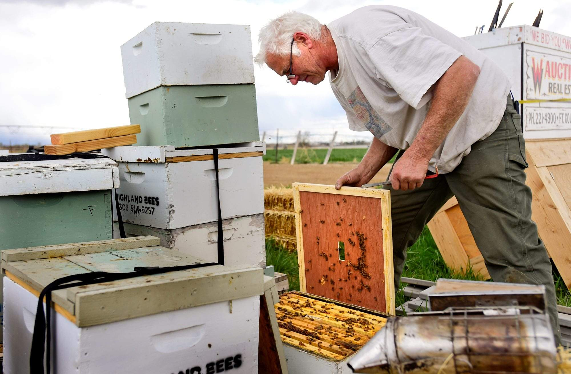 beekeepers buzzing about hive loss