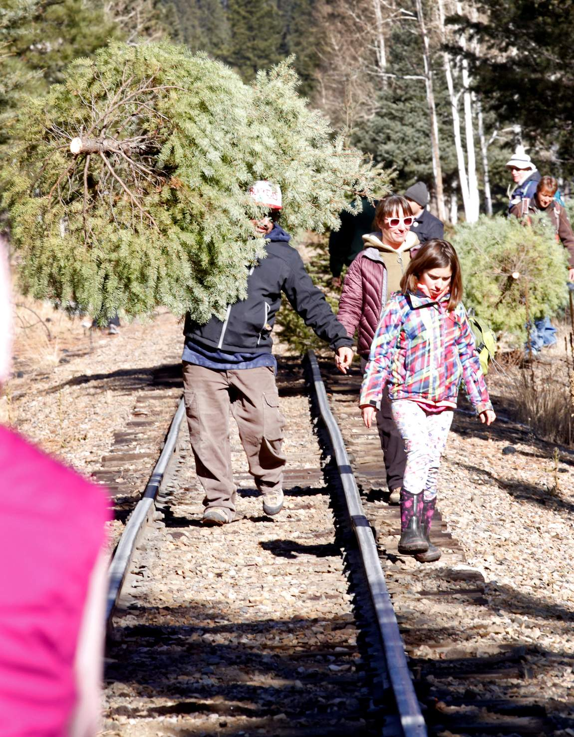 Christmas tree permits on sale in Southwest Colorado