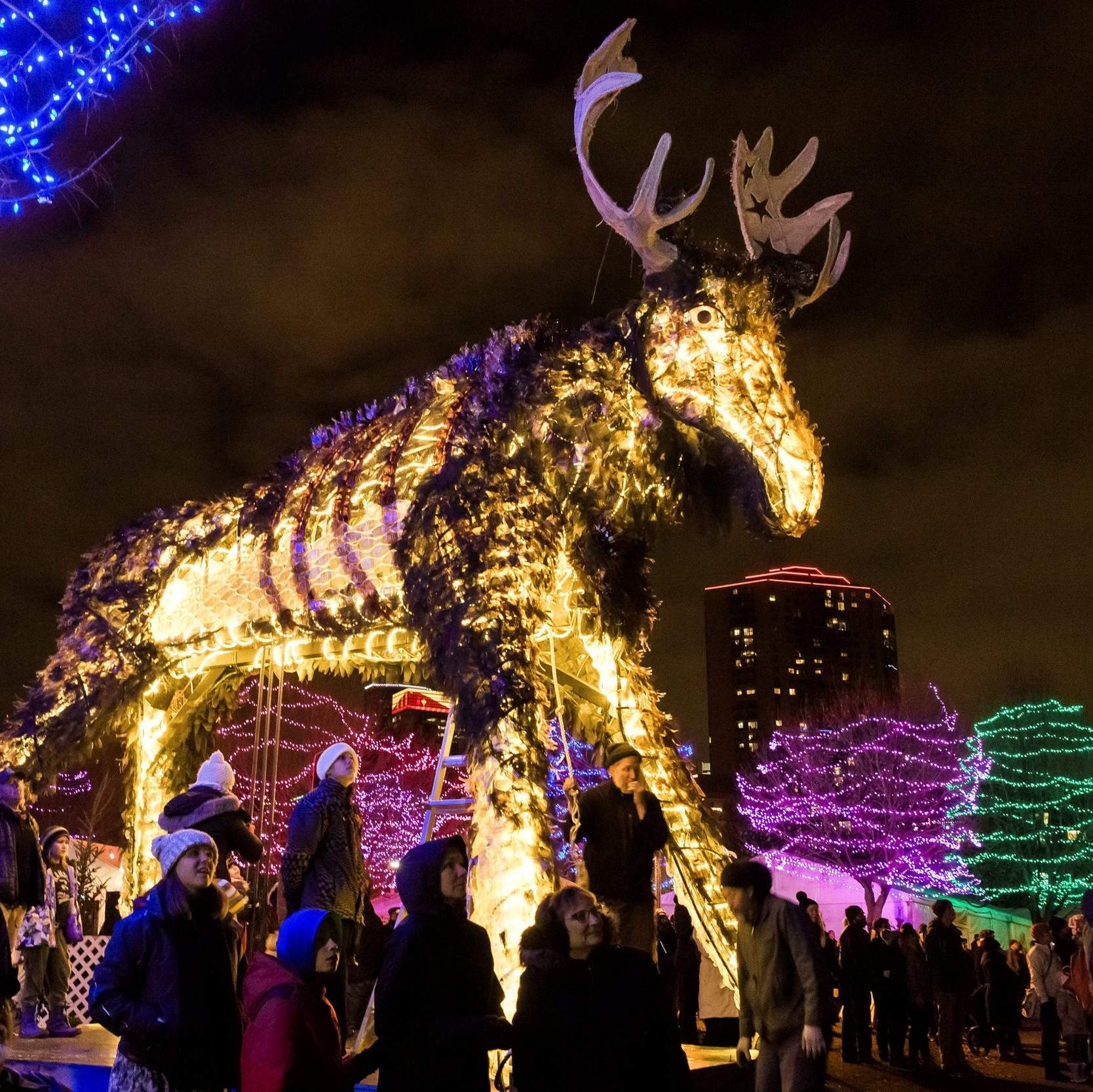 a lit up sculpture called wolf moose featured last year as well as this year in the 2017 holidazzle event in loring park in minneapolis