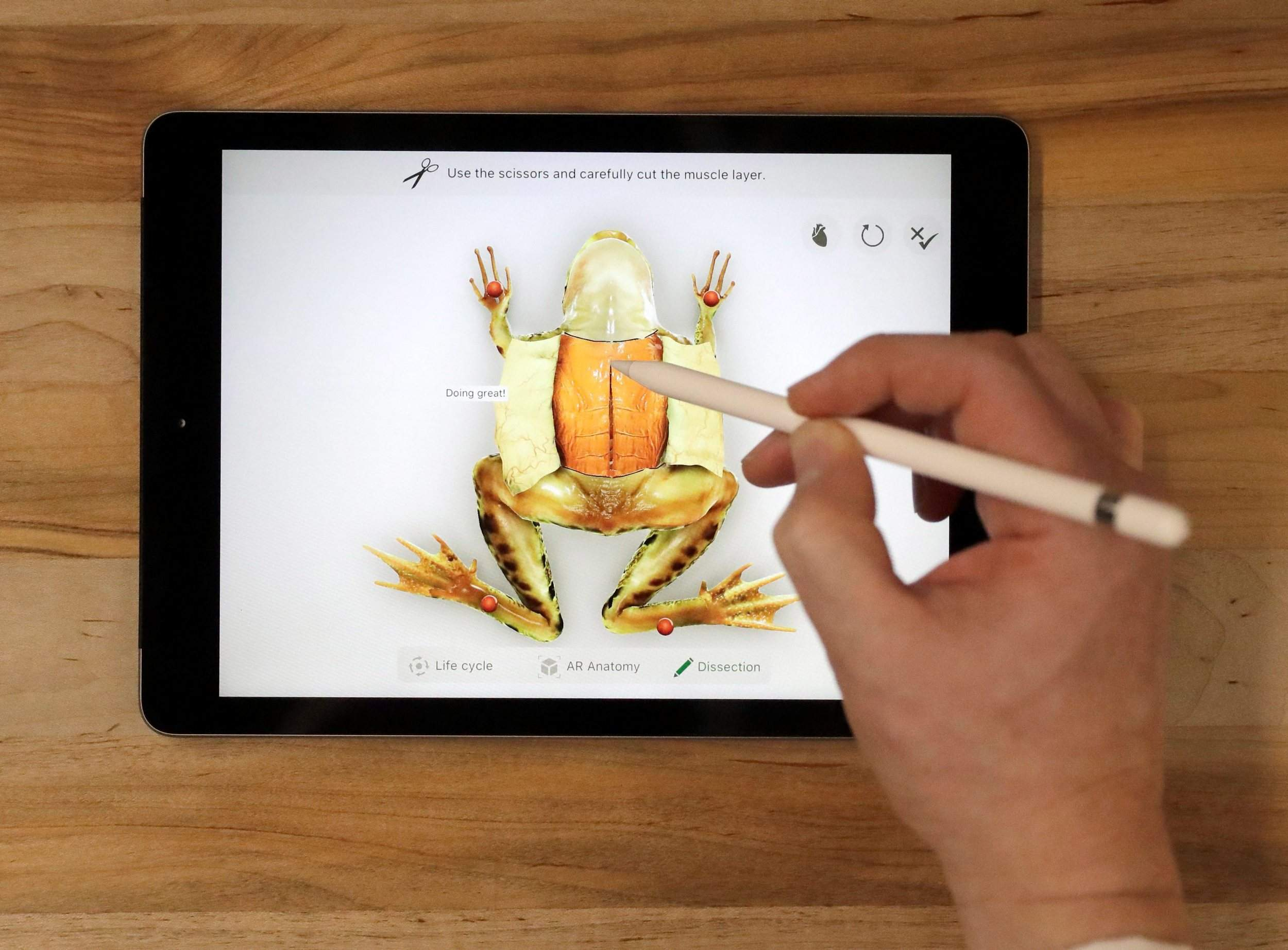 Virtual dissection of a frog on an Ipad