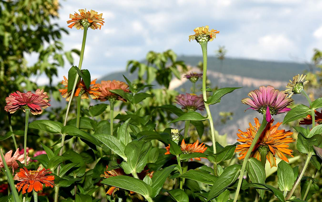 Defensive Gardening Will Help Your Flowers Vegetables Thrive