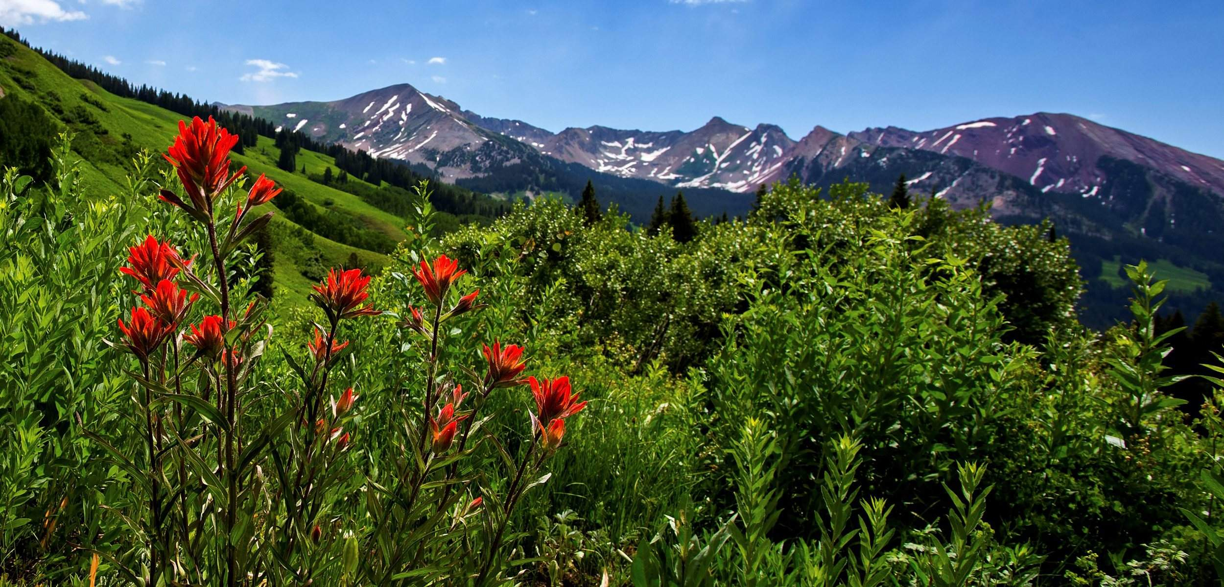 Crested Butte Full Of Flowers