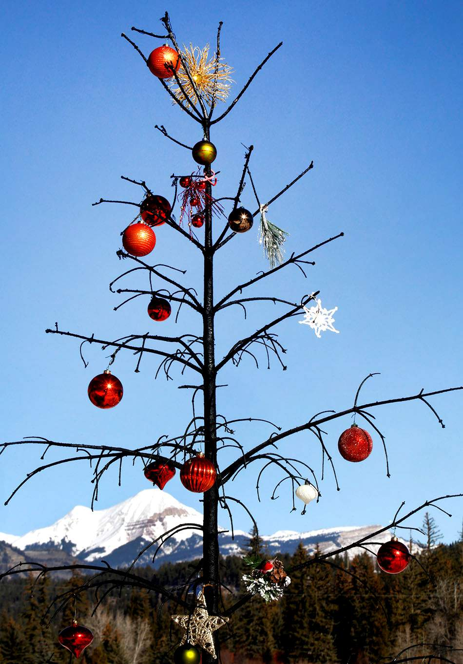 Christmas Tree Purgatory >> What S Our Chance Of A White Christmas In Durango