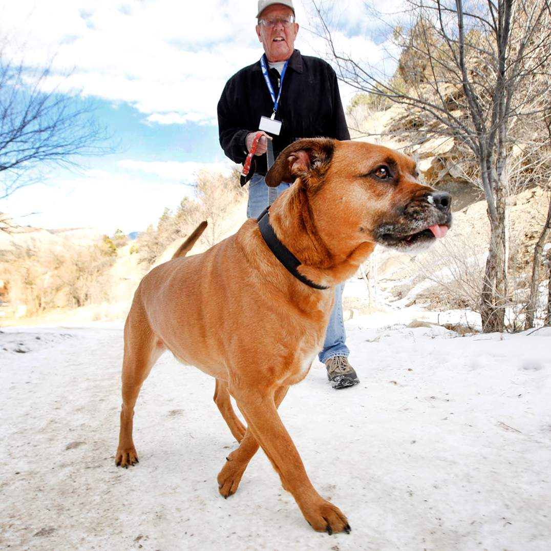 Take a hike with a Humane Society dog up for adoption