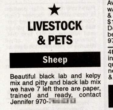 Puppy ad is the black sheep of the classifieds