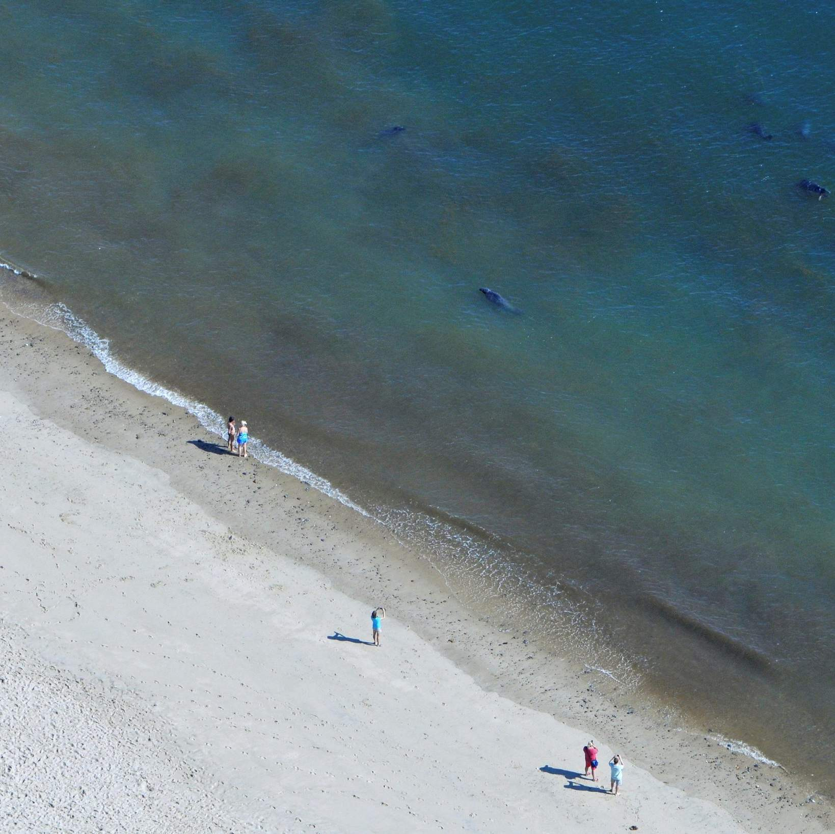 Sound barrier to chase seals, prevent shark attacks debated