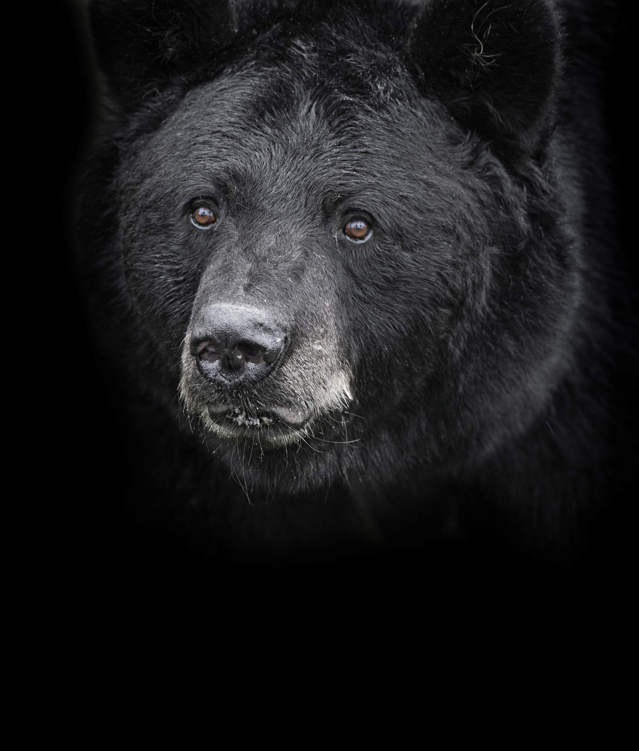 Can hunters help thin bear population in Colorado?