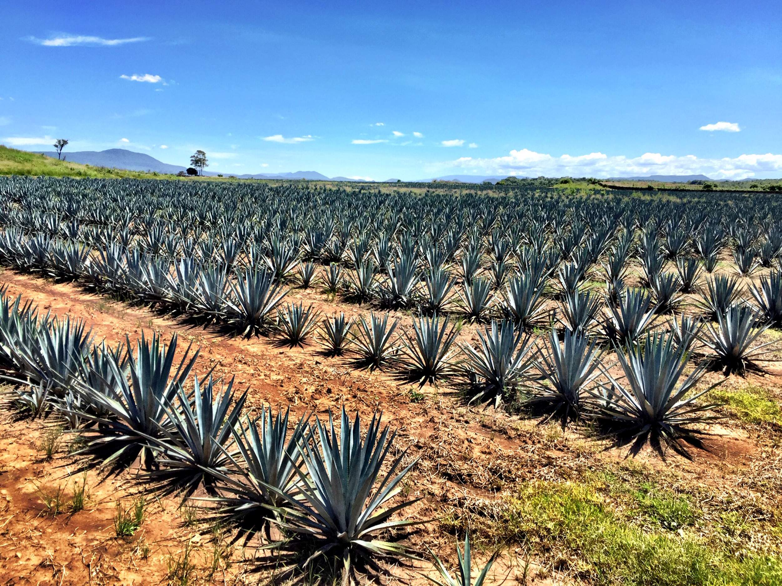 Is Your Tequila Jeopardizing Mexico